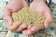 Buckwheat seeds and dollar banknotes, depicting the agribusiness Royalty Free Stock Image