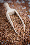 Buckwheat seeds and wooden scoop Stock Photos