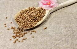 Buckwheat in a spoon Stock Photography