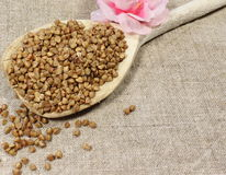 Buckwheat in a spoon Royalty Free Stock Photography