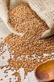 Buckwheat Stock Photos