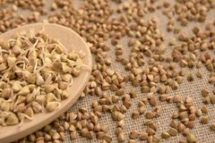 Buckwheat sprouts. Grain cereals. Natural background Royalty Free Stock Photos