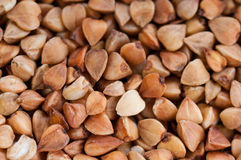 Buckwheat texture. Abstract background food Royalty Free Stock Photo