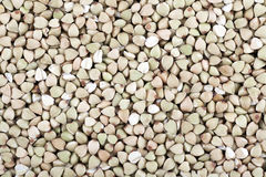 Buckwheat Texture Stock Image