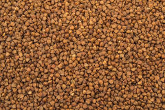 Buckwheat texture  high-quality photograph of premium buckwheat groats Stock Photography