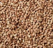 Buckwheat throughout the field of the frame. royalty free stock images
