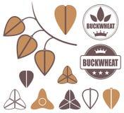 Buckwheat. Vector illustration (EPS 10 Stock Photo