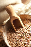 Buckwheat in wooden bowl Royalty Free Stock Image