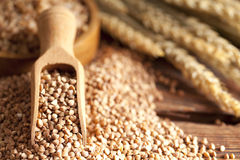 Buckwheat and wooden scoop Stock Image
