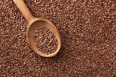 Buckwheat with wooden spoon. Royalty Free Stock Photography
