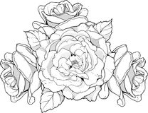 Bucnch of roses in graphic sty Royalty Free Stock Image