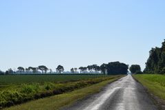 Mississippi delta farmland vibrant green scattered trees rice fields cloudless blue sky oil road vanishing in distabce royalty free stock photos