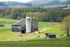 Bucolic landscape #3. A bucolic spring scene with farm animals,  in a hilly terrain. Close up Stock Photos