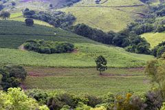 Bucolic landscape with coffee plantation. Manioc and corn on the hill. Minas Gerais, Brazil Royalty Free Stock Photography