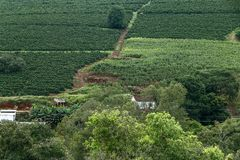 Bucolic landscape with coffee plantation. Manioc and corn on the hill. Minas Gerais, Brazil Royalty Free Stock Image