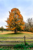 Bucolic landscape of horses grazing under Autumn trees Royalty Free Stock Photo