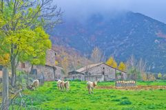 Bucolic scene in the mountains. Bucolic landscape : mountains, trees, cows and farmer`s house in Viladrau , Catalonia, Spain a foggy winter day royalty free stock photography
