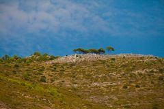 Bucolic landscape with pines on a hill. Under blue sky royalty free stock photography