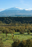 Bucolic Landscape And Volcano Etna Stock Photos