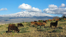 Bucolic Landscape And Volcano Etna Royalty Free Stock Images