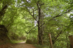A bucolic path in the forest. A bucolic path in a forest in Navarra Royalty Free Stock Images