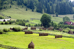 Bucovina, Romania. Rural landscape with traditional haystacks in Bucovina,Romania Royalty Free Stock Images