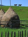 Bucovina symmetric landscape. Symmetric landscape in Bucovina: two cows, two haycocks, two fences Royalty Free Stock Photography