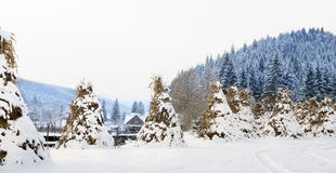 Bucovina winter landscape Royalty Free Stock Images