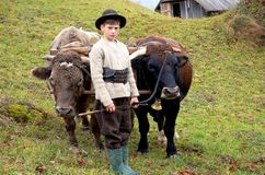 Bucovinian boy with bulls in Bucovina in traditional clothes. Bucovinian boy with bulls in Bucovina Romania. Wood chopper traditional clothes in Bucovina Royalty Free Stock Images