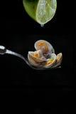 Bucárdias e suco de lima cozinhados Imagens de Stock