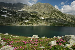 Bucura lake in june with snow patches and flowers stock photos