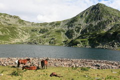 Bucura lake, Romania Royalty Free Stock Images