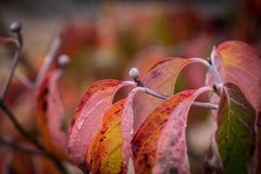 Bud in autumn time Royalty Free Stock Images