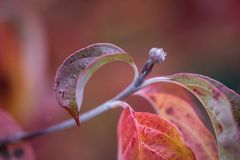 Bud in autumn time Stock Images