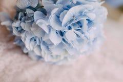 Bud Blue Hydrangeas Stock Photo