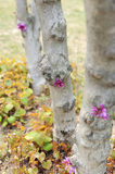 Bud. The dawning Trees small pink leaves Stock Photo