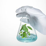 Bud grows in laboratory glass Stock Photos