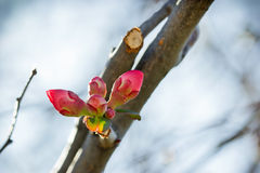 Bud in January Stock Photos