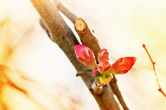 Bud in January Royalty Free Stock Photos