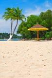 bud kokosowi drzewa obrazy royalty free