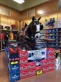 Bud Light Light Beer Display immagini stock libere da diritti