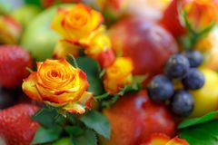 Bud of an orange-red rose against a background of a bright fruit bouquet close-up royalty free stock image