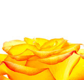Bud of an orange rose Stock Image