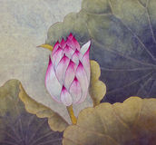 Bud of pink lotus. Lotus symbol of purity and wisdom Stock Photography