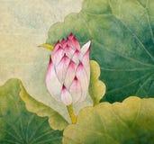 Bud of pink lotus. Lotus symbol of purity and wisdom Stock Photo