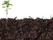 Bud of plant Stock Image