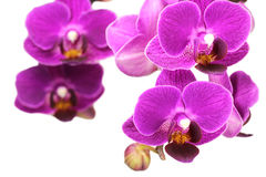 Bud of purple orchid with water drops. Texture Stock Image