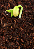 Bud seedling Stock Photos