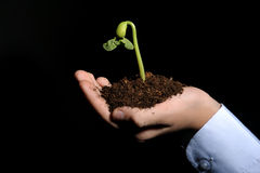 Bud seedling in hand. Bud plant seedling in a hand, black background Royalty Free Stock Photo