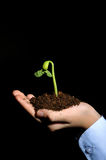 Bud seedling in hand Royalty Free Stock Photography